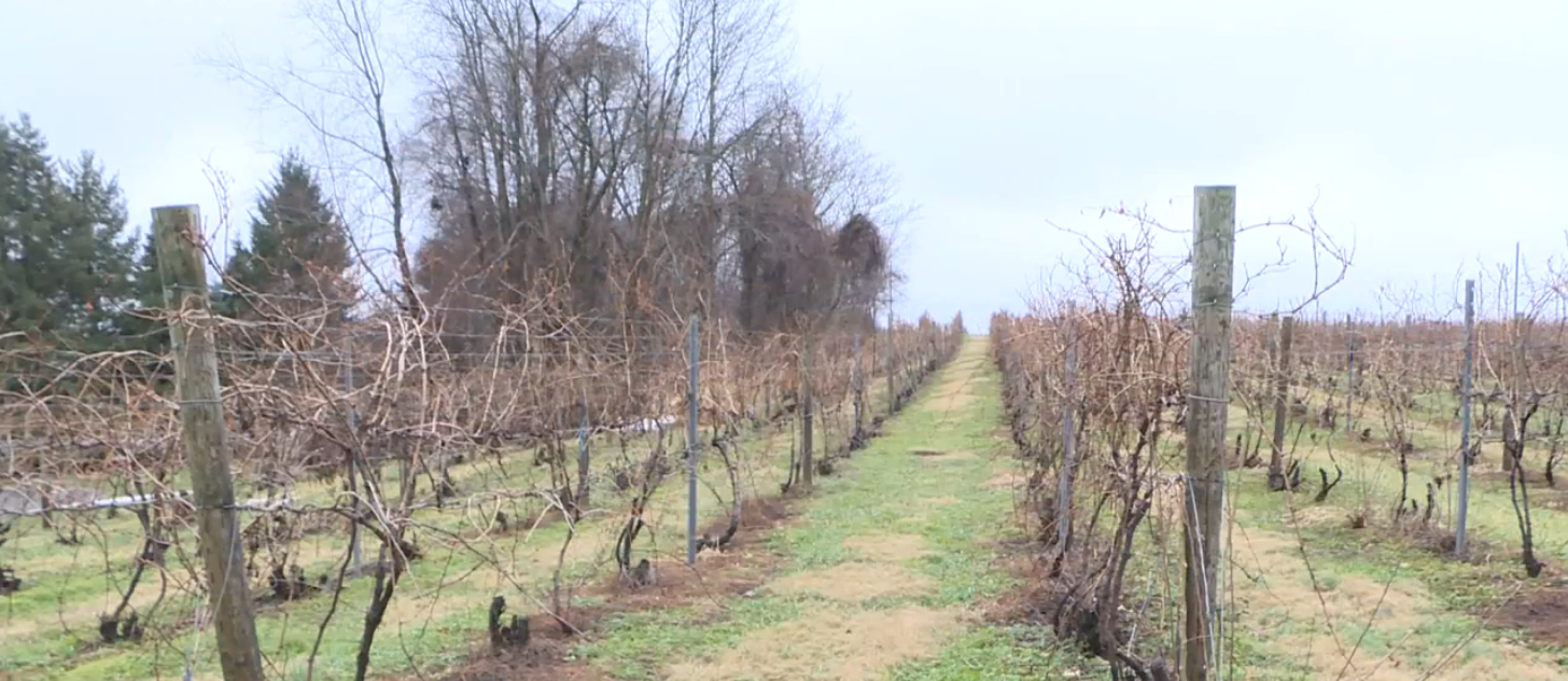 Fruit farmers struggle after dramatic temperature swings. // WSBT 22 photo