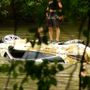 Crews remove Jaguar from French Broad River