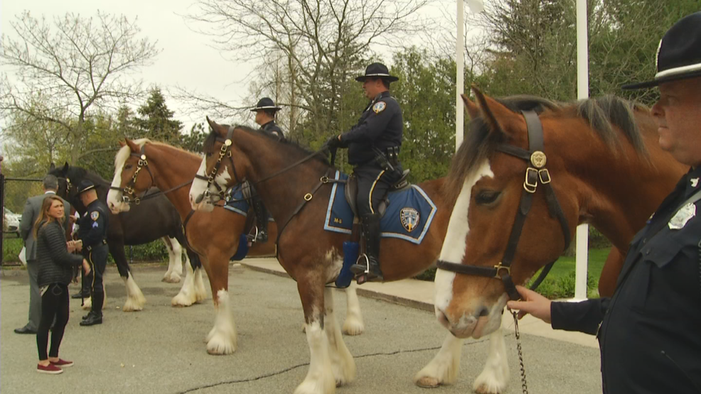 Five new Clydesdales join the Providence Police Department