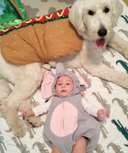 IMAGE: IG user @rory_the_dc_goldendoodle / POST:{&amp;nbsp;}Happy Halloween from my brother the elephant and a hotdog! Fingers crossed we get lots of treats!!<p></p>