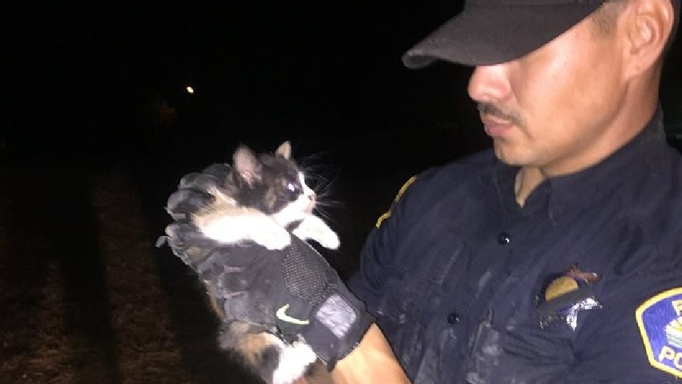 Police officers rescue kitten from drainage pipe using a ...