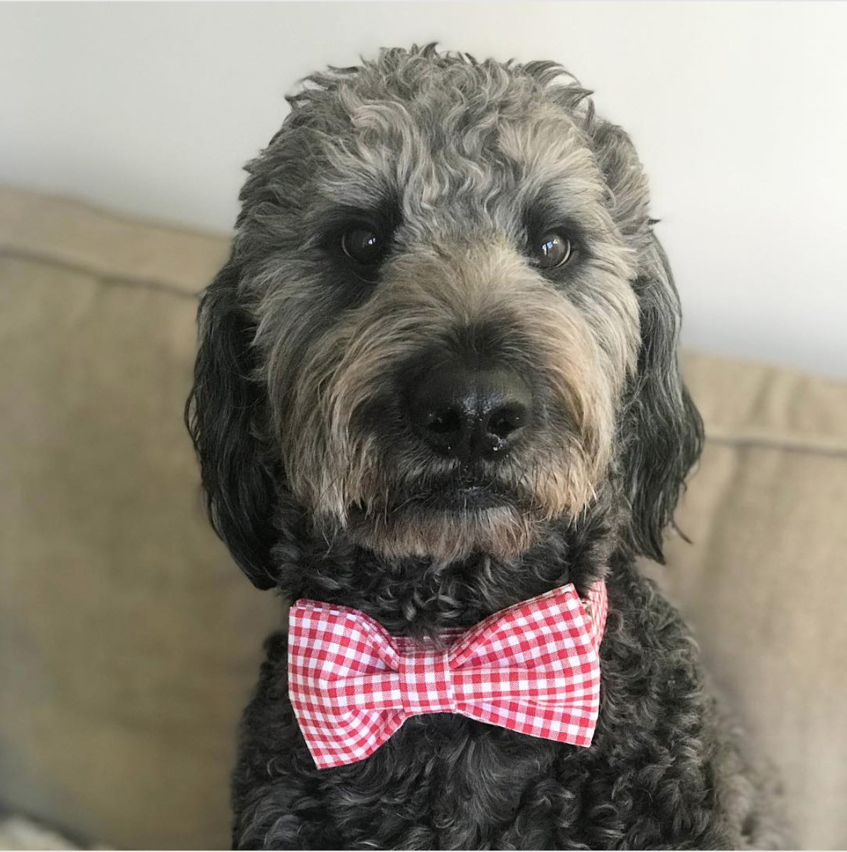 Every girl's crazy about a sharp dressed man. (Image via @jace_theblackdoodle)