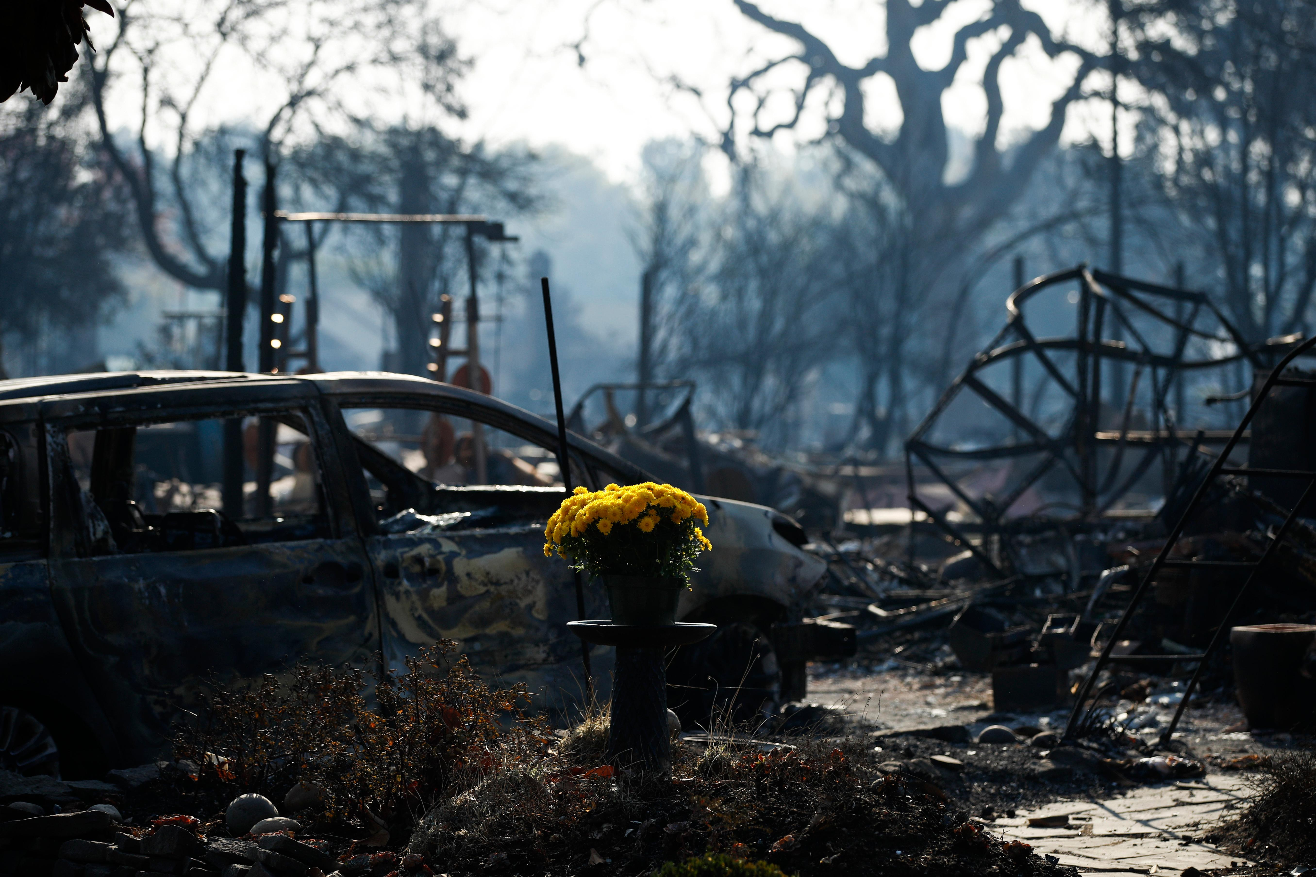 A bouquet of fresh flowers are placed, Sunday, Oct. 15, 2017, in the Coffey Park neighborhood in Santa Rosa, Calif., that was devastated by a wildfire. A state fire spokesman says it appears firefighters are making good progress on deadly wildfires that started a week earlier, devastating wine country and other parts of rural Northern California. (AP Photo/Jae C. Hong)