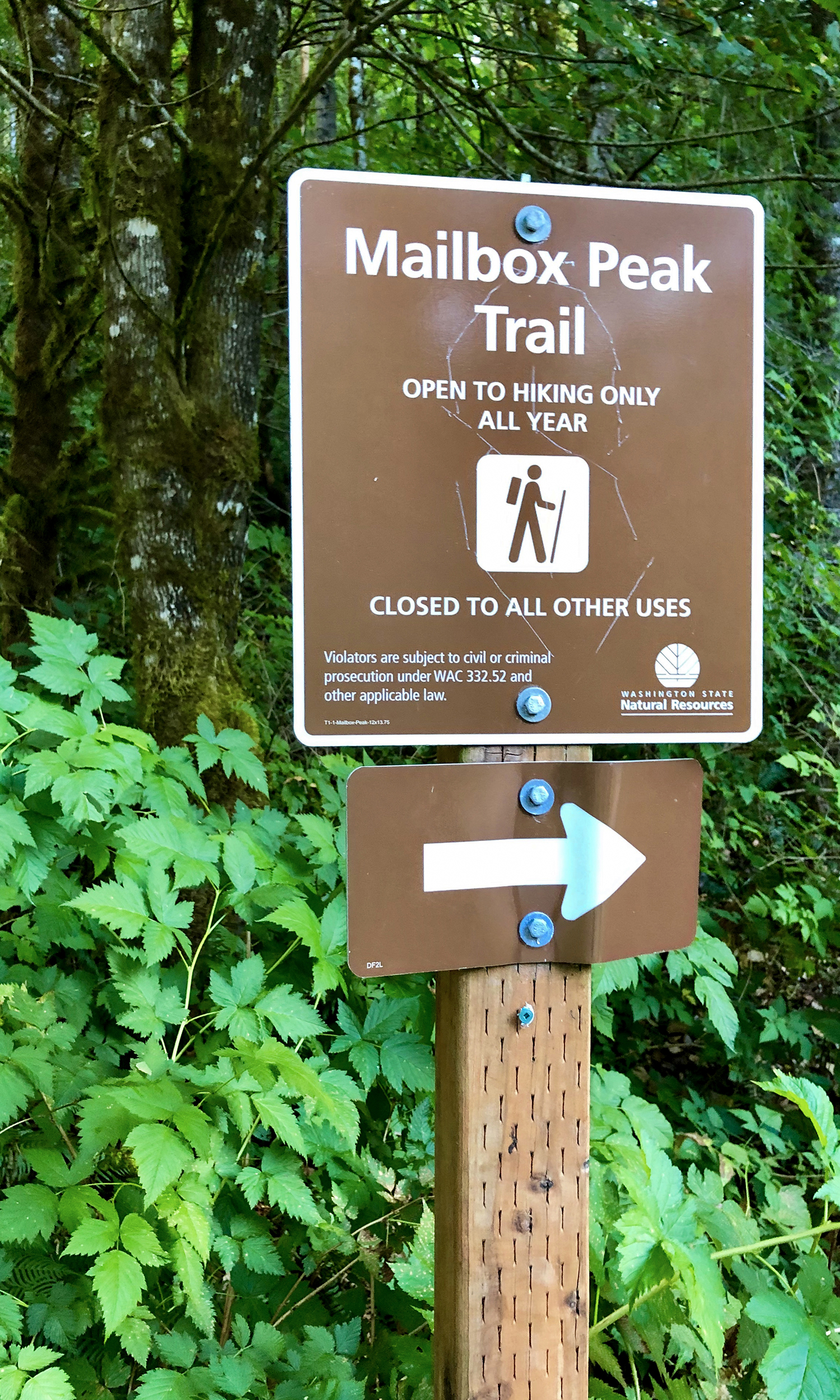 <p>Two main trails lead to the summit. The Old Trail leads hikers to the summit quicker, at around 5.4 miles round-trip and about 740 feet in elevation gain per mile, but is riddled with challenging root systems, dense forests to navigate and a thigh-burning ascent. The New Trail, built in 2014, follows along a properly maintained, easier-on-the-knees trail, and clocks in at 11.6 miles round-trip. (Image:{&nbsp;}Rachael A. Jones / Seattle Refined){&nbsp;}</p>