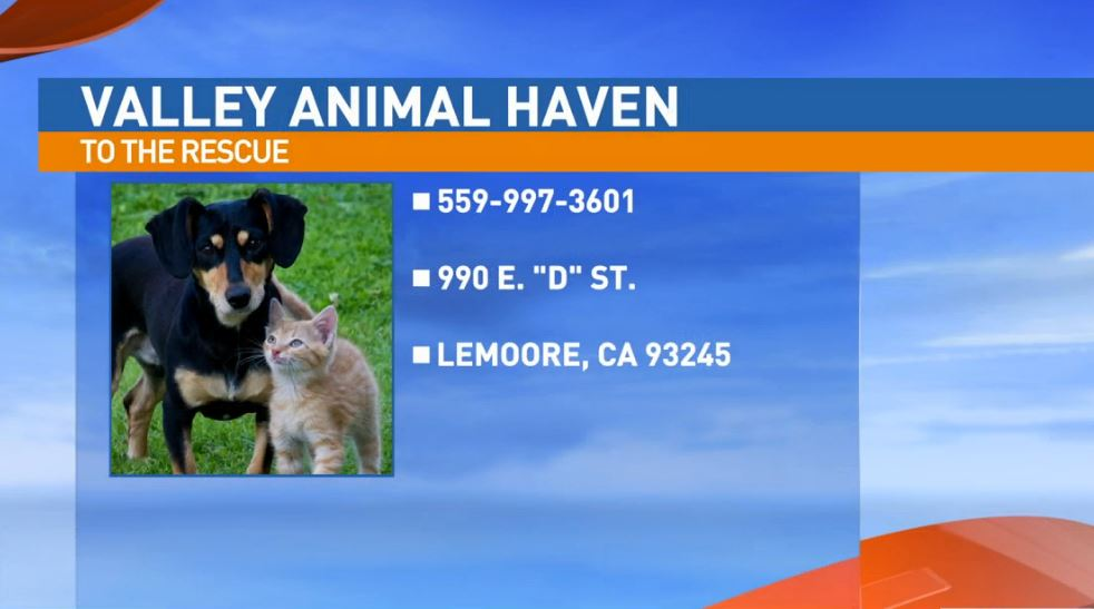 Valley Animal Haven is located at 990 E D St. in Lemoore.