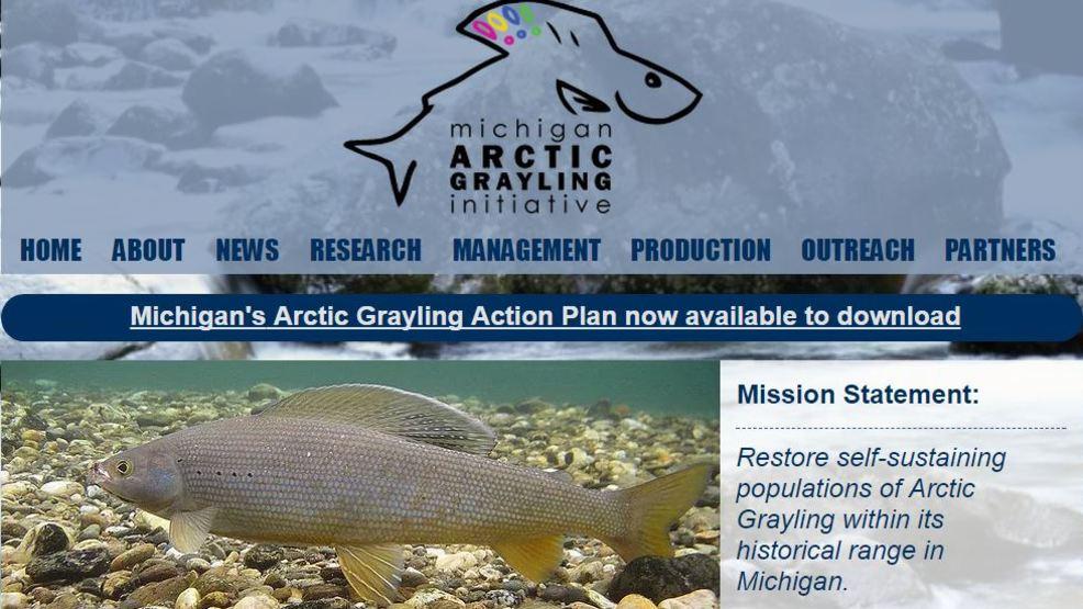 Grayling Fish Michigan | Foundation Awards 180k Grant For Grayling Restoration Study In